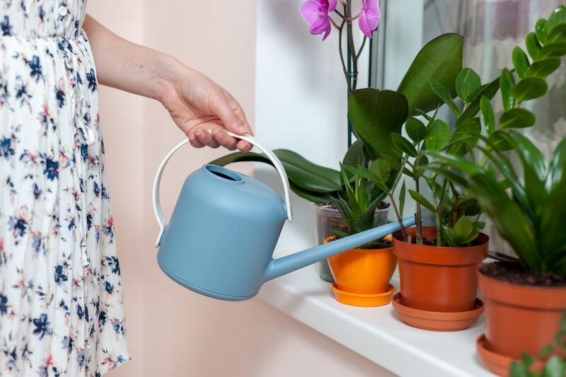 Полив комнатных растений. Иллюстрация для статьи используется по стандартной лицензии ©life-hacky.ru