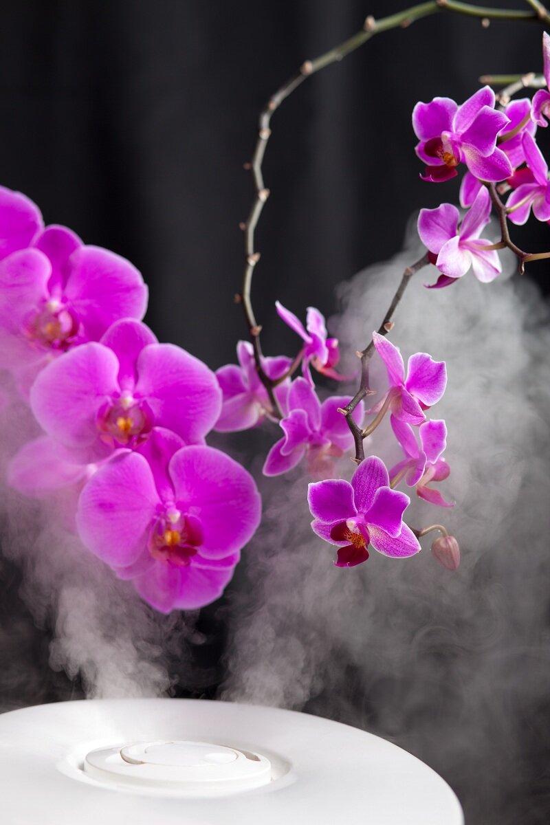 Цветущая орхидея. Иллюстрация для статьи используется по стандартной лицензии ©life-hacky.ru