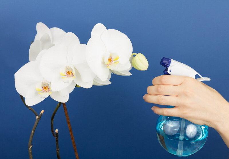 Фото Выращивание орхидей. Иллюстрация для статьи используется по стандартной лицензии ©life-hacky.ru