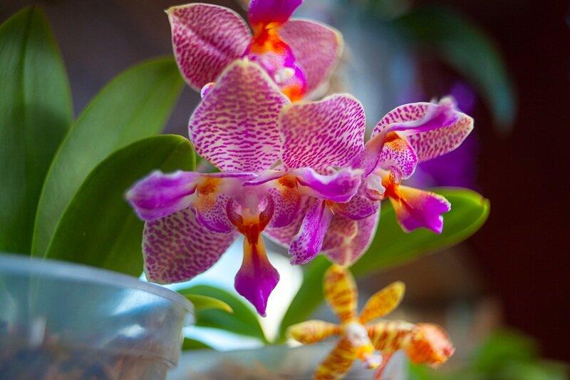 Прекрасная орхидея. Иллюстрация для статьи используется по стандартной лицензии ©life-hacky.ru