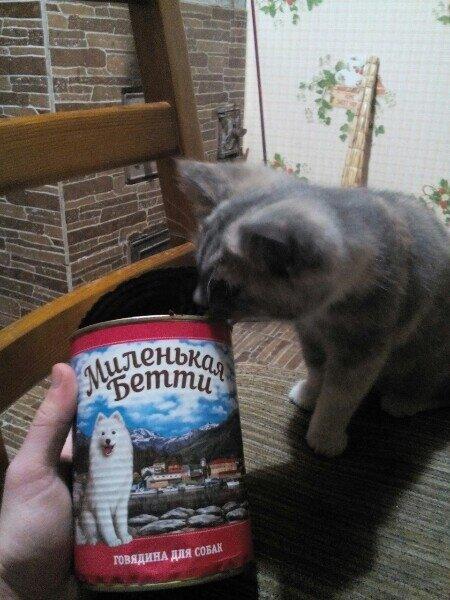 Читатель предложил, как дешево кормить кошку за 66 рублей почти месяц