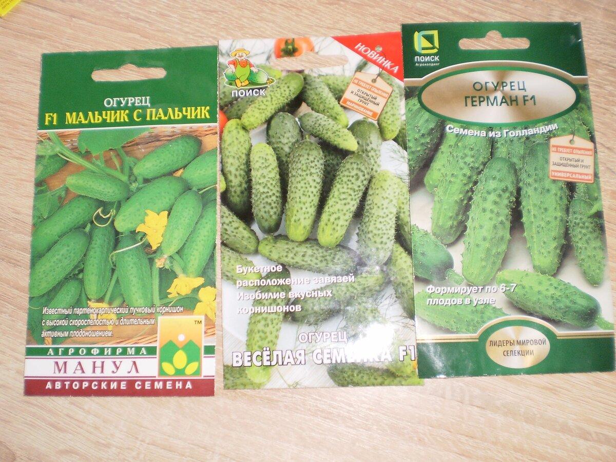 """Гибриды """"Мальчик с пальчик"""" и """"Весёлая семейка"""" пучкового типа  высаживала в прошлом году. Наряду с """"Германом"""" дали хороший урожай."""