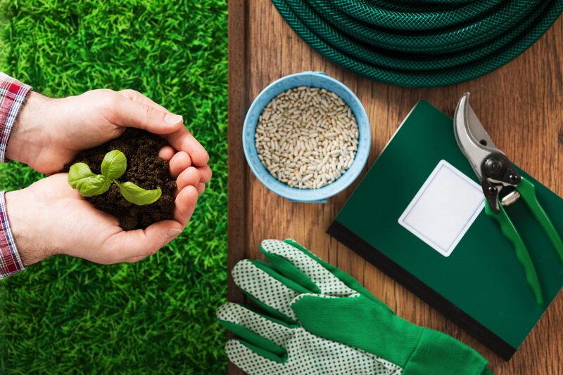 Посадка микрозелени. Иллюстрация для статьи используется по стандартной лицензии ©life-hacky.ru