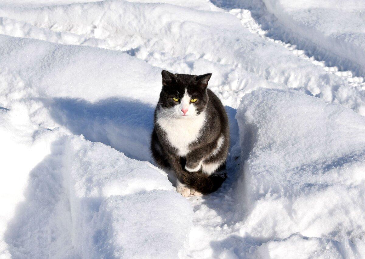 Кот в ожидании, когда почистят снег