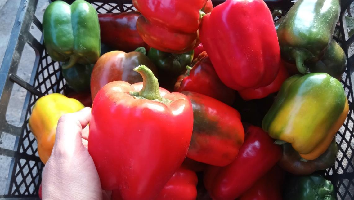 Когда сеять томаты и перцы. Лунный календарь на 2021 год