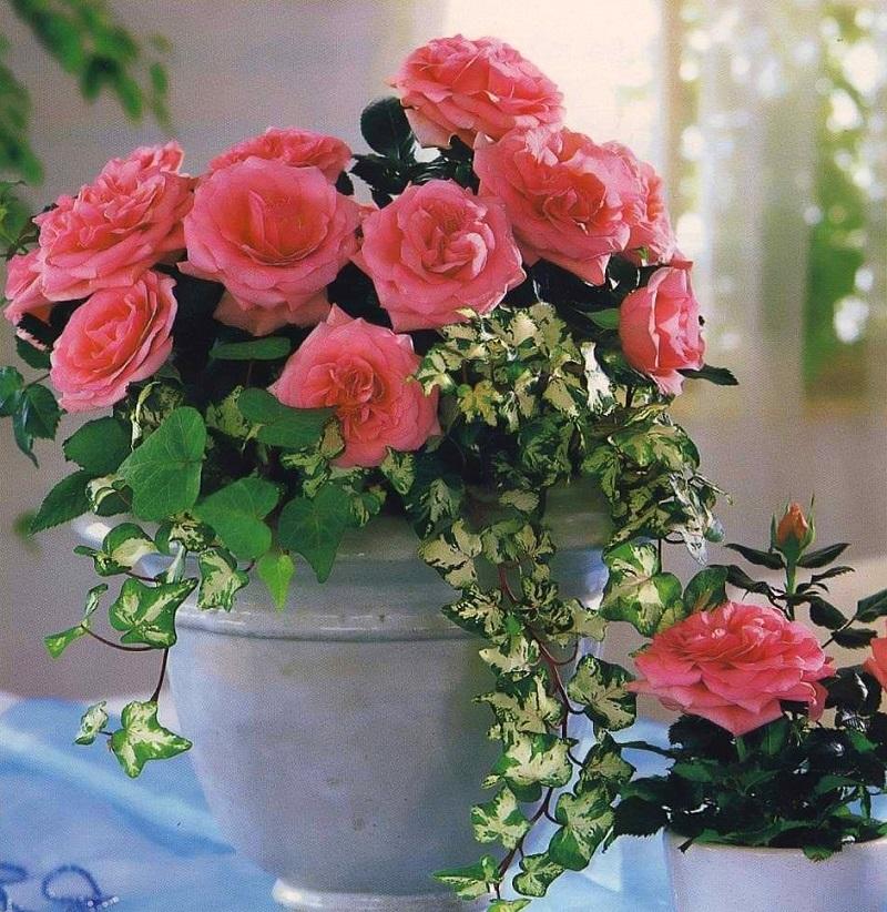 7 домашних растений, которые принесут позитивную энергетику в твой дом!