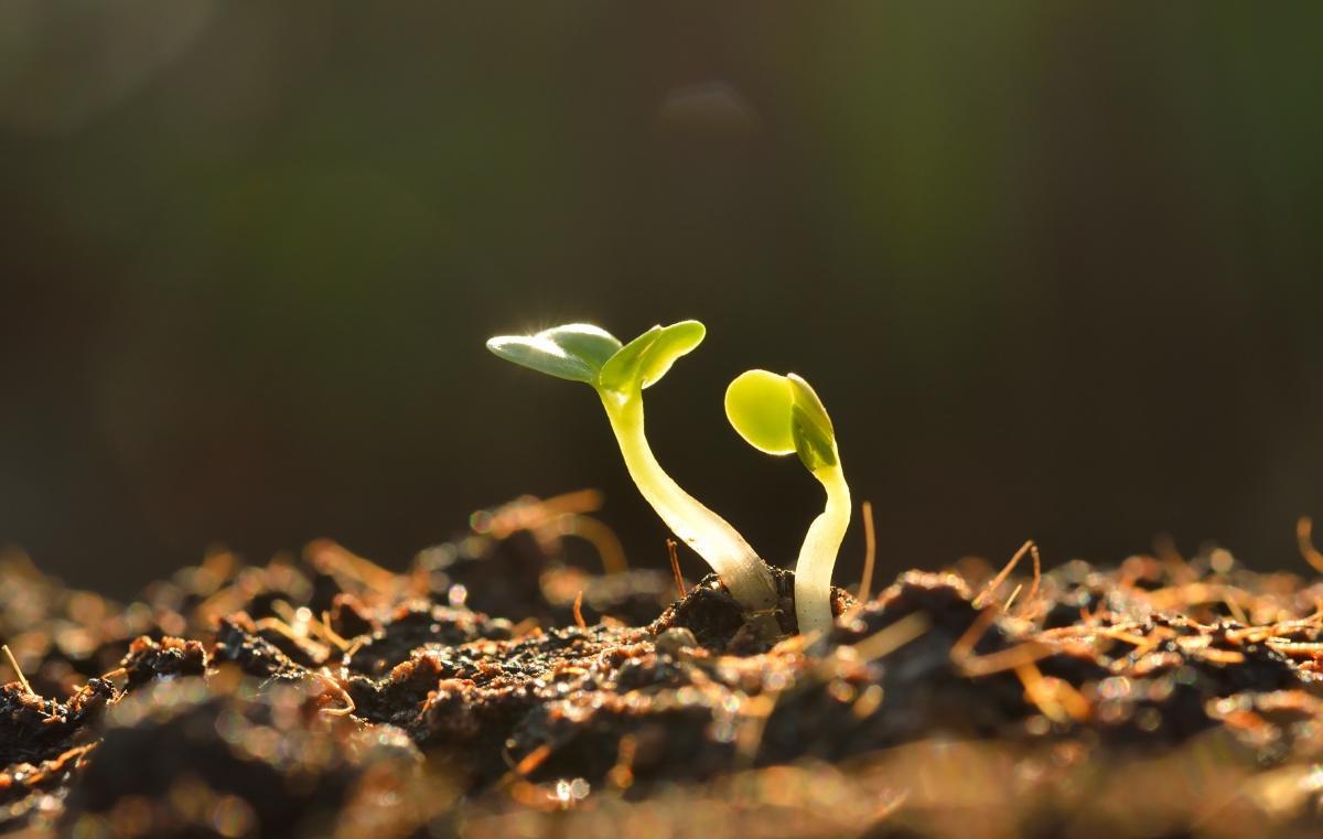 Тип почвы: как узнать и зачем это надо
