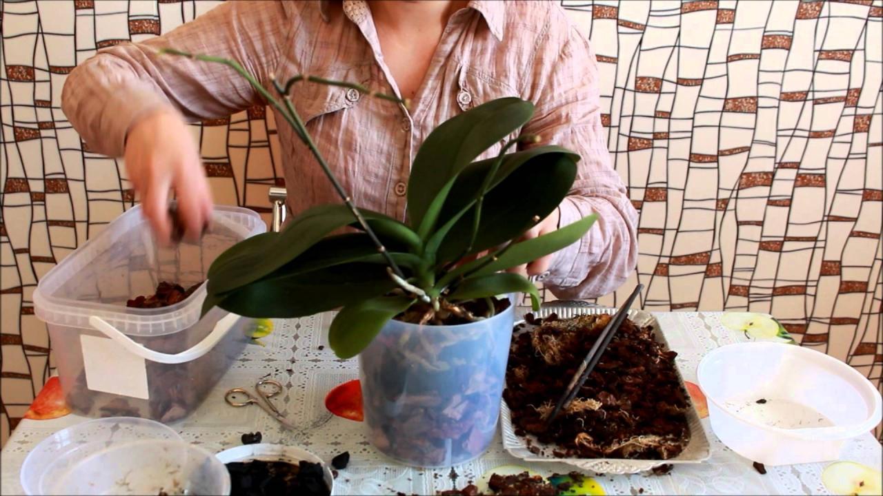 Оживите свою орхидею! 7 важных советов