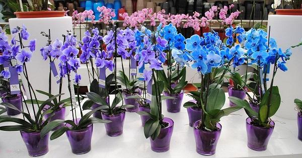 Секреты рассадки орхидей: как превратить 1 растение в 100.