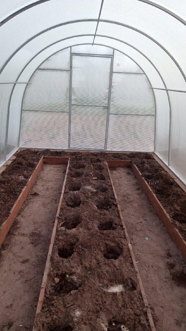 Внесение органики и золы в лунки в апреле
