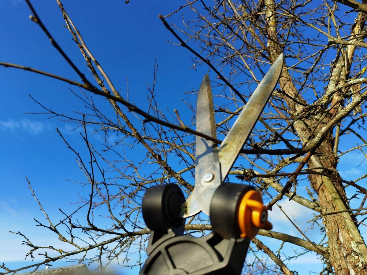 Обрезка яблонь. Иллюстрация для статьи используется по стандартной лицензии ©life-hacky.ru