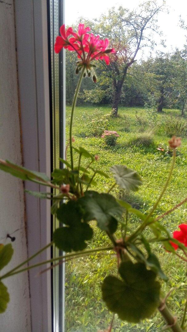 Сад. Вид из окна