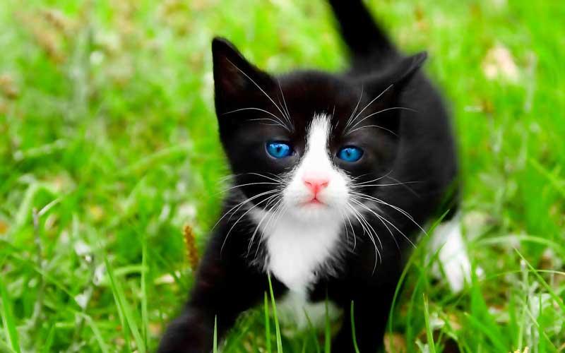 Как кошка показывает о присутствии негатива в доме