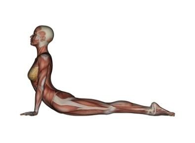 10 поз йоги, чтобы убрать жир на животе!